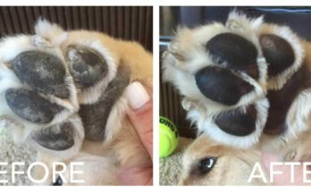 How To Reduce Rough Dog Paws